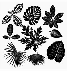 Tropical plants leaves silhouettes set vector
