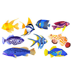 Tropical sea and aquarium fishes collection on vector