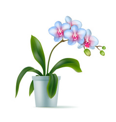 White orchid pot realistic isolated vector