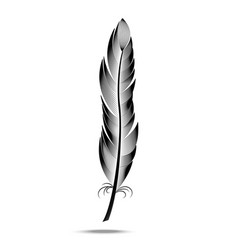 black and white contour feather vector image vector image