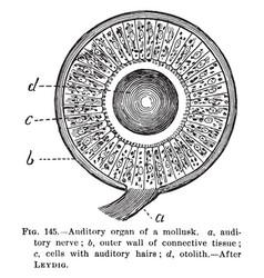 auditory organ vintage vector image