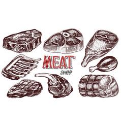 beef meat pork steak chicken leg meatloaf vector image