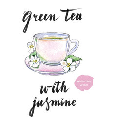 cup of green tea with jasmine flowers vector image