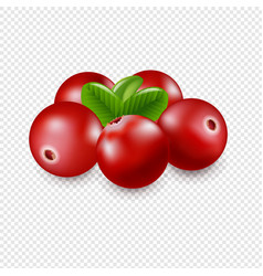 granberry isolated in transparent background vector image