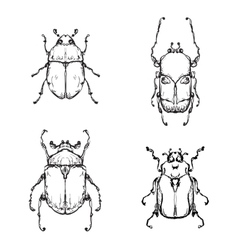 Hand drawn insect vector image