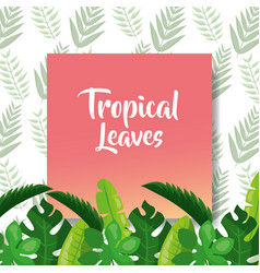 tropical leaves pink cover foliage natural vector image
