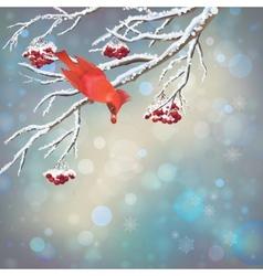 Christmas Snowy Rowan Berries Bird Card vector image