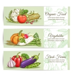 Organic fresh farm vegetables vector image