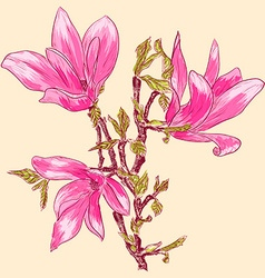 Bright Pink Sketch of Magnolias vector