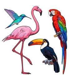 Colorful exotic tropical birds - flamingo macaw vector
