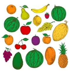 Enjoyable freshly harvested fruits berries icons vector image