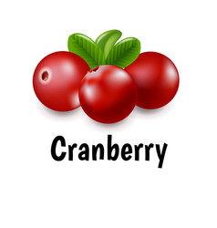 granberry with transparent background vector image