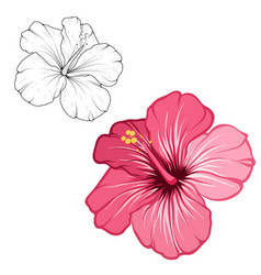 hibiscus pink red blooming flower isolated macro vector image