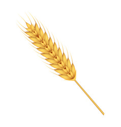 wheat icon realistic style vector image