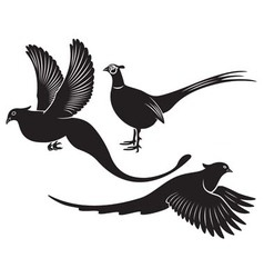 pheasant vector image vector image
