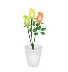 Three Beautiful Roses in A Flower Pot vector image