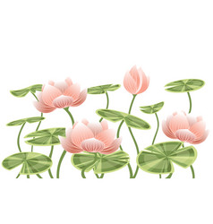 water lily lotus pink flower with green leaves vector image