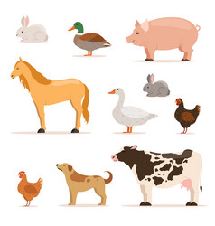 different domestic animals on farm geese ducks vector image vector image