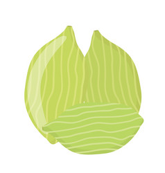 cardamom spice for food in cartoon flat style vector image