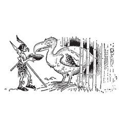 animal alphabet d dodo vintage vector image