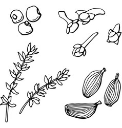 black and white set spices from cloves p vector image