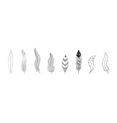 collection of hand drawn feathers ink vector image