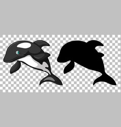 cute orca whale and its silhouette on transparent vector image