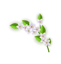 Spring white flowers with leaves pattern vector