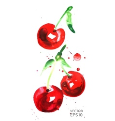 Watercolor cherry vector