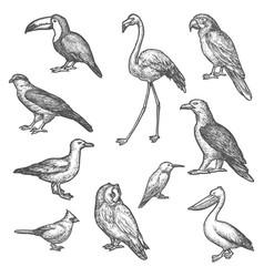 set isolated bird wildlife sketches animal vector image