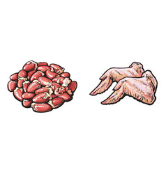 chicken wings offal gizzards set sketch vector image