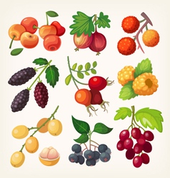 Juicy colorful berry icons vector image