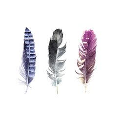 hand drawn watercolor feather set vector image vector image