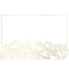 peony rose flowers border frame bottom horizontal vector image