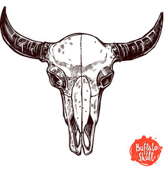 Buffalo Skull Hand Drawn Scetch vector image