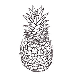 hand drawn of pineapple vector image
