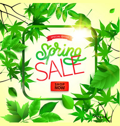 spring background with green leaves and frame on vector image