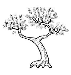 pine vector image vector image