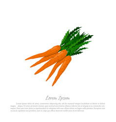 bunch of orange carrots on a white background vector image