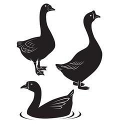 goose vector image vector image