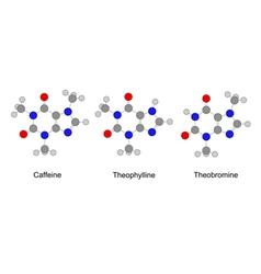 alkaloids purine series vector image