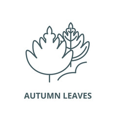 autumn leaves line icon linear concept vector image