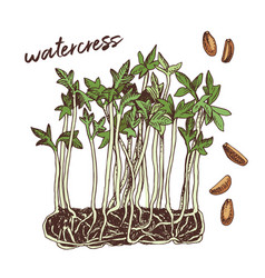 Hand drawn watercress microgreens healthy food vector