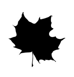 maple leaf silhouette isolated on white vector image