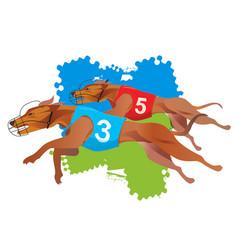 greyhound dogs racing vector image