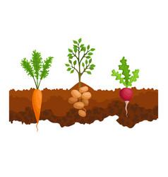 Vegetables growing in ground one line sugar vector