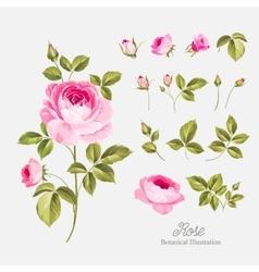 Wedding flowers bundle vector
