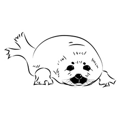 seal baby vector image