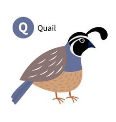 Letter q quail bird zoo animal alphabet english vector