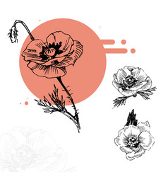 sketch red poppies in circle vector image